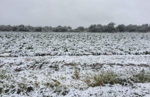 Early freeze in Colorado could cost marijuana, hemp growers millions in losses