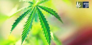 Major Setback for Medical Marijuana in Nebraska