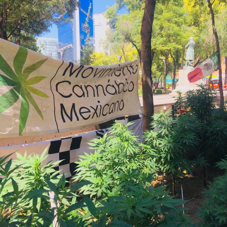 Mexico's Senate Reconvenes While Cannabis Grows Nearby