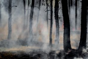 Oregon wildfires prompt delay for hemp field day