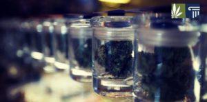 Vermont Set to Legalize Recreational Marijuana Sales