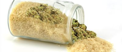 1599859567844_Cannabis-info-how-to-save-your-weed-when-it-gets-wet-2.jpg