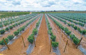Flowr to buy Terrace Global amid tepid cannabis M&A market
