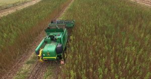 Hemp farmers get last-minute delay on USDA compliance, but not everyone is happy