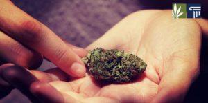 Arizona Votes to Legalize Marijuana Second Time Round