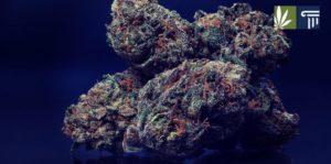 Mississippi Voters Choose Citizen-Led Medical Marijuana Initiative Over Lawmakers' Proposal