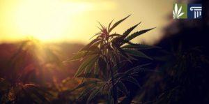 New Jersey Poll Indicates Marijuana Legalization Ballot Will Win Big on Nov 3
