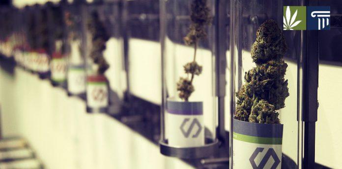 New Jersey votes to legalize recreational marijuana