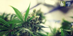 The 7 States Most Likely to Legalize Marijuana in 2021