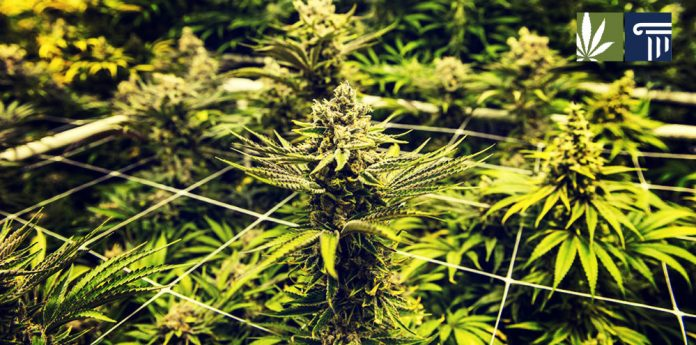 UN reschedules cannabis