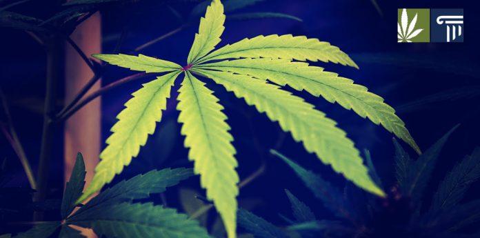 new jersey cannabis still illegal