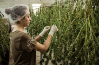 Due Diligence for Suppliers & Cannabis Supply Chain Partners