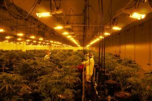 Trichome Financial-James Wagner deal, How Trichome Financial acquired and restructured troubled marijuana producer JWC