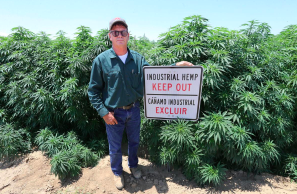 Man behind $1 billion hemp lawsuit faces drug charges as federal judge considers motion to dismiss the suit