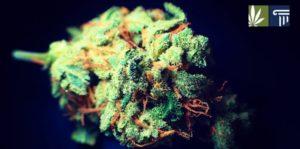 Marijuana Legalization Bill Filed in Maryland Ahead of 2021 Session
