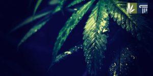 New York Lawmakers Prefile Eight Marijuana Reform Bills for 2021