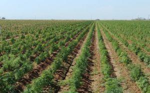 Oregon hemp farmer to lead Farm Bureau's young growers committee