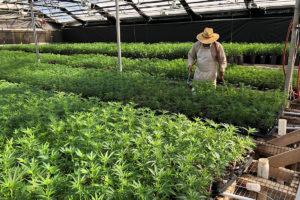 California labor board shuts down hemp seed company for workforce pay, insurance violations