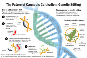 Genetic editing offers marijuana and hemp companies a way to improve plant strains
