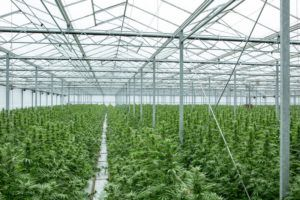 Medical cannabinoid firm GW Pharma to be acquired by Jazz Pharmaceuticals for $7.2 billion