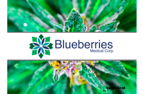 Blueberries Medical Enters Growing Peruvian Medical Cannabis Market: Enters Binding LOI with Futura Farms
