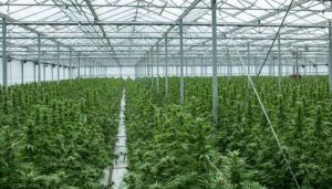 Canadian marijuana lawsuit | Canopy Growth Pharmhouse TerrAscend, Canopy Growth, others formed JV 'solely' to pump marijuana stock, refiled CA$500 million lawsuit alleges