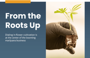 Expert tips to improve cannabis cultivation in 2021