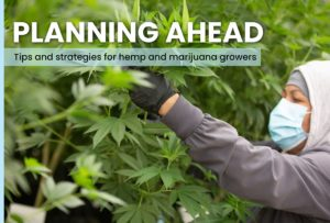 Fertilizing and amending soil on outdoor marijuana and hemp farms