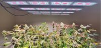 The Ten Biggest Mistakes When Building a Cultivation Facility