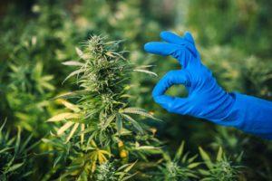 Cannabis Spending in Canada Exceeded $2 Billion in 2020