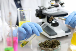 Michigan University Offers Cannabis Chemistry Scholarship—The First In The Nation