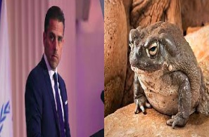 Now We Find Out Hunter Biden's Been On The Toad Venom Too ! Mitch McConnell Next?