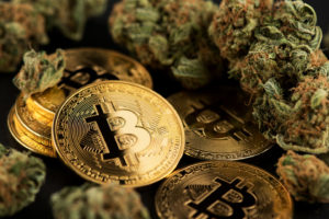 Bitcoin Mine Discovered In Suspected Illegal Cannabis Farm Site