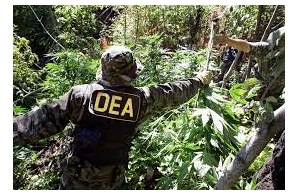 DEA Report Shows Cannabis Arrests And Seizures Up In 2020