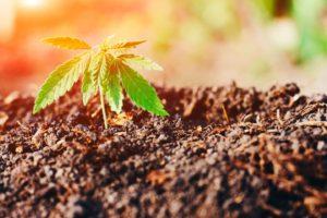 GOP Lawmakers File Comprehensive Federal Marijuana Decriminalization Bill