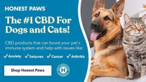 Honest Paws Leads the Pack with CBD Oil for Dogs