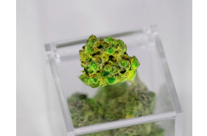 How Medical Marijuana Impacts People's Health And Happiness