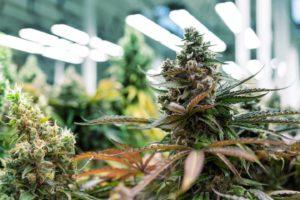 Idaho Senate Passes Bill (SB 1218) To Ban Marijuana Advertising