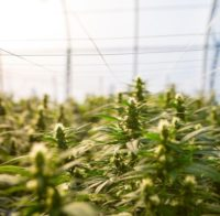 Essential Elements to Set Up a Green, Zero-Waste GrowFacility