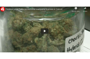 Federal judge halts recreational marijuana licenses in Detroit