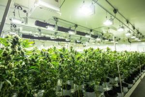 Oklahoma Medical Marijuana Tracking System Delayed by Lawsuit