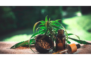 THC Products and CBD In Canada