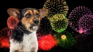 FDA Warns Against Unregulated CBD Products for Dog Anxiety Amid Fireworks