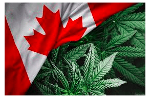 Legal Cannabis Rules in Canada: What Can Change in 2021?