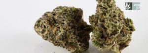 Mississippi Supreme Court Will Not Reconsider Medical Marijuana Ruling