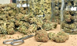 New Mexico Expected to Run Out of Cannabis When Legal Sales Begin