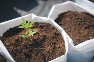 New York Senator Introduces Cannabis Cultivation Bill