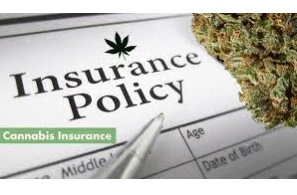 Whitepaper: The Challenges of Insurance for the Cannabis Industry