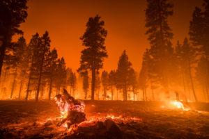 Wildfires Threaten California Cannabis Crops