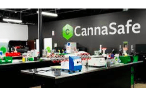CannaSafe Announces Departure of CEO, Appoints New Management Team